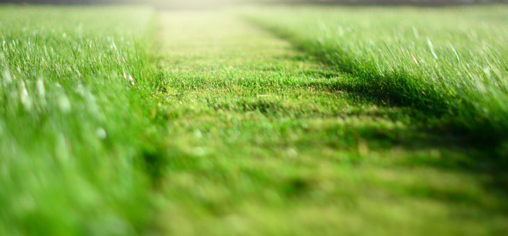 12 Tips For Hiring A Lawn Care Company